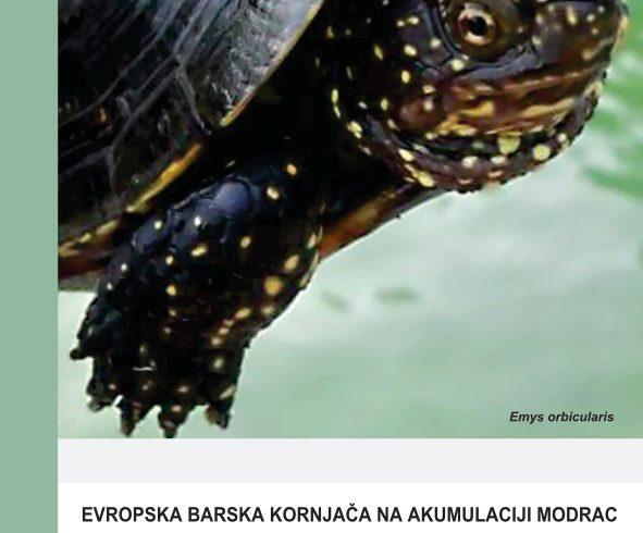 Barska kornjaca na jezeru Modrac