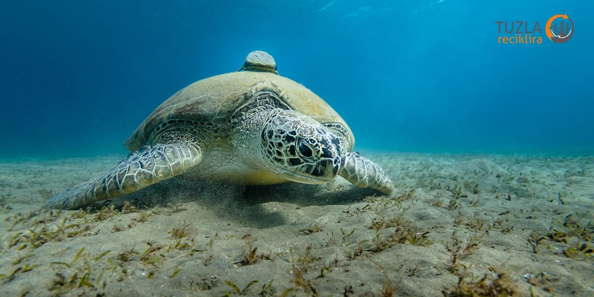 Naučnici konačno otkrili zašto morske kornjače jedu plastiku