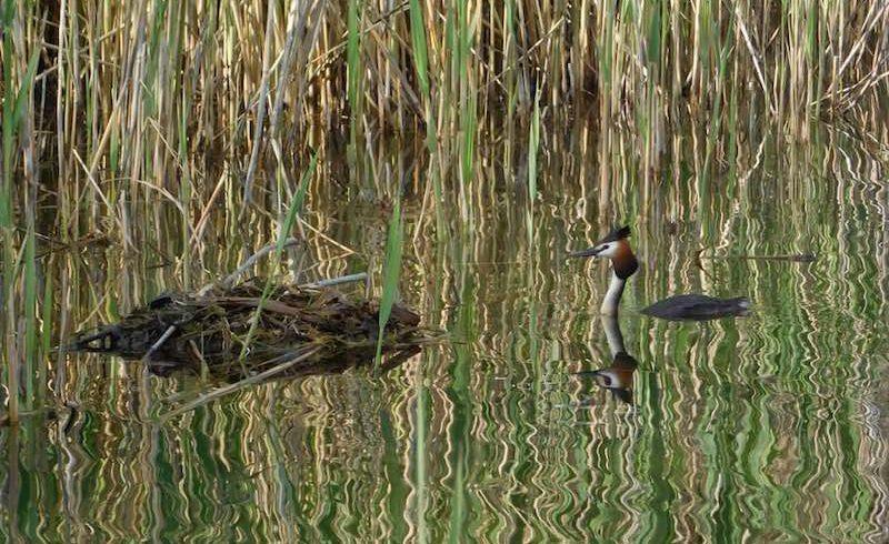 Poziv za dostavljanje ponuda za poziciju Terenski organizator akcija čišćenja i uređenja jezera